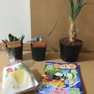 ブーファン・ディスティカの種類と栽培記録