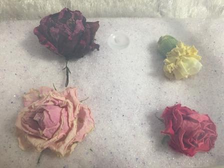 花のシリカゲル上置乾燥3日目の写真