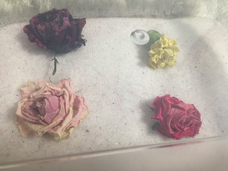花のシリカゲル上置乾燥15日目の写真