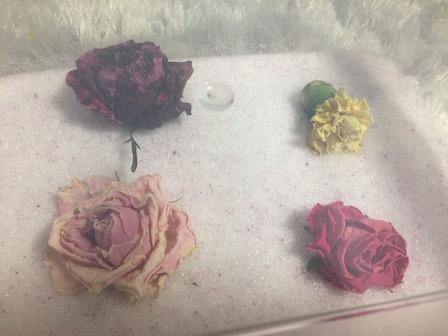 花のシリカゲル上置乾燥35日目の写真