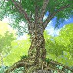 カムカムの果実と栽培