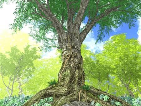 庭や畑におすすめの風除けになる木の種類|風よけ対策として庭木に使おう!