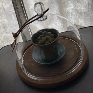 ガラスケースに入れた多肉植物の写真