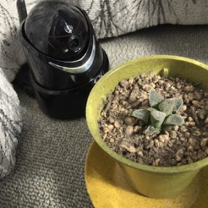 ウェブカメラの植物栽培利用とIot化