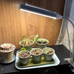 植物育成用ライトで室内栽培している観葉植物たち