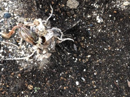 枯れた植物の写真