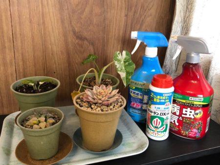 家庭用農薬と観葉植物の写真