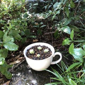 【カップが鉢に変身】いらなくなった陶器の食器は穴を開けて鉢に再利用しよう!