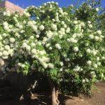 🌼庭に植えたい春に咲く白い花の種類