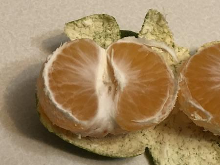 みかんの果実写真