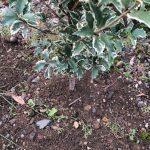 【注意!】庭に植えると危険な植物