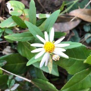 【グリーンスナップの使い方】撮影した花や植物の写真で名前を検索できますよ!