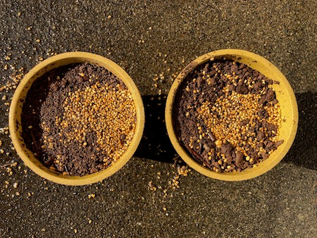 種まき用土に水をかけた写真