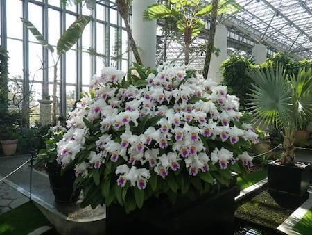淡路島蘭展の蘭の密植鉢写真