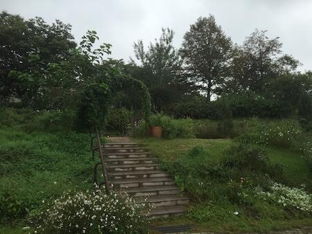 薬香草園のハーブガーデン3