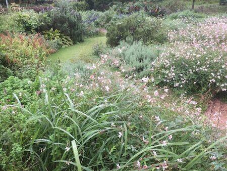 薬香草園のハーブ園写真