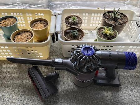 ダイソンの小型掃除機と室内の多肉植物の写真