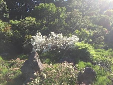 北大植物園で咲く花