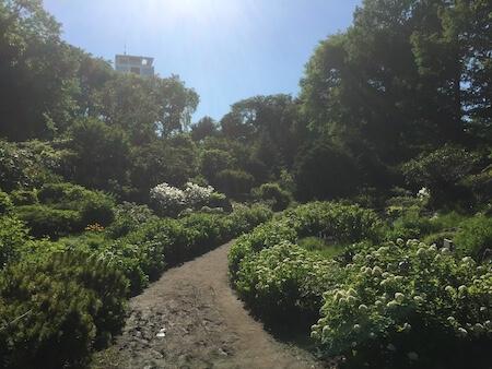 北大植物園の道