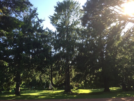 北大植物園の芝生
