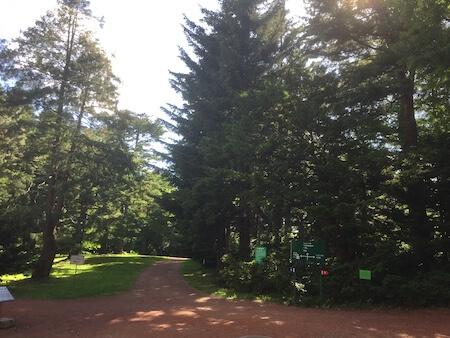 北大植物園の森林写真