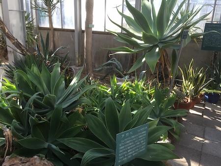 北大植物園の温室1