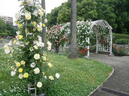 長居植物園のバラアーチ写真