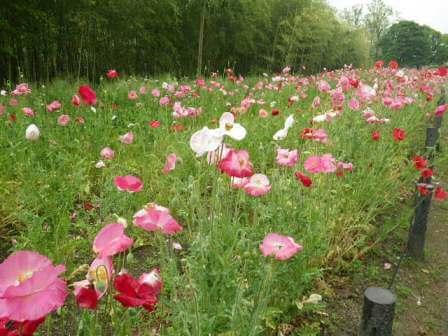 長居植物園の花写真3