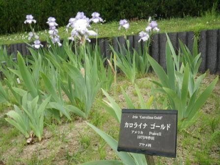 長居植物園の花写真