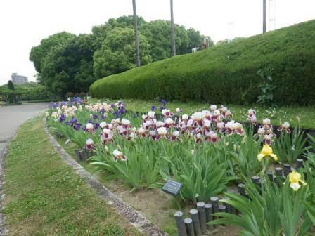 長居植物園の花写真2