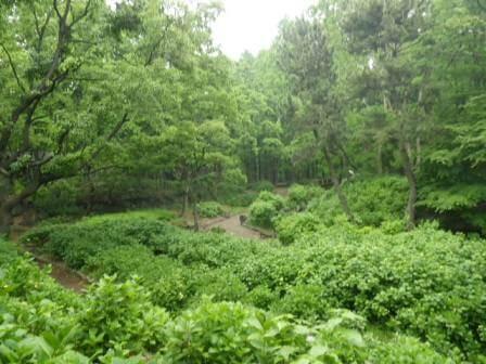 長居植物園のアジサイ写真