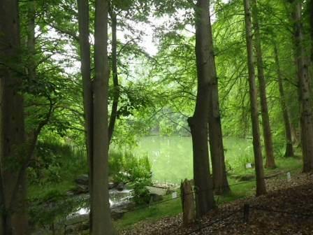 長居植物園の風景写真3