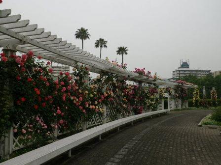 長居植物園のバラ写真2
