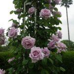 🌷お花の見せ方が勉強になる長居植物園
