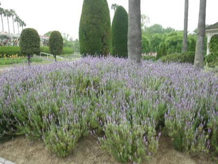 長居植物園のバーブ写真3