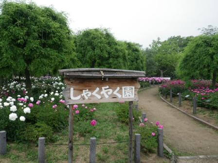 長居植物園のシャクナゲの写真
