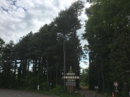 外国樹種見本林の写真4