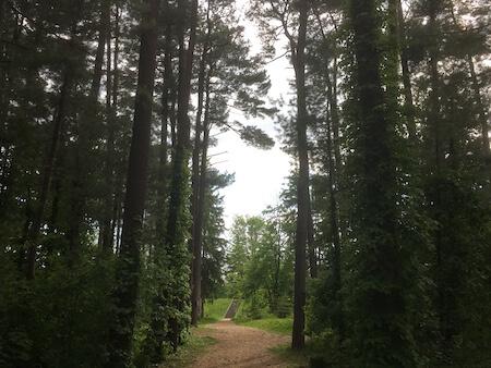 外国樹種見本林の写真2