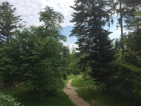 外国樹種見本林の写真1