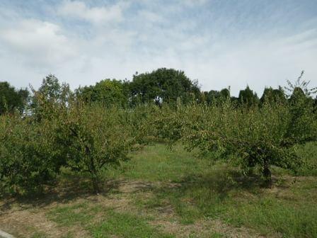 フルーツフラワーパークの果樹園5