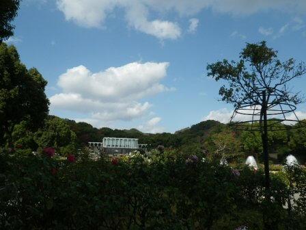 須磨離宮公園のバラ園写真4