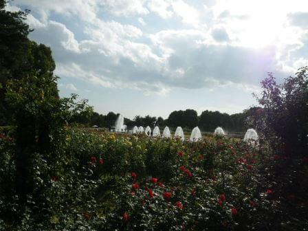須磨離宮公園のバラ園写真6