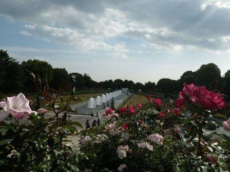 須磨離宮公園のバラ園写真
