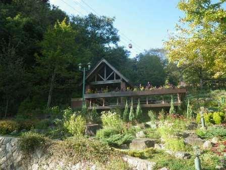 布引ハーブ園の植物写真9