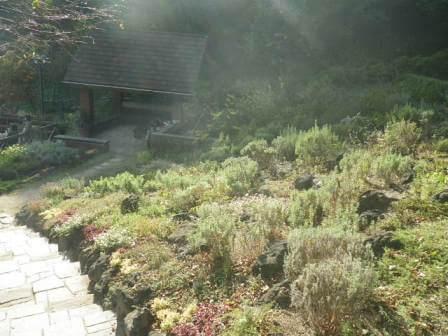布引ハーブ園の植物写真8