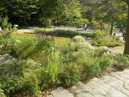 布引ハーブ園の植物写真7