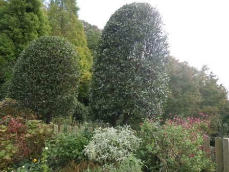 布引ハーブ園の植物写真3