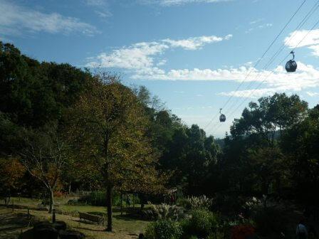 布引ハーブ園の植物写真6