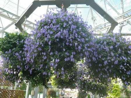 布引ハーブ園の植物写真4