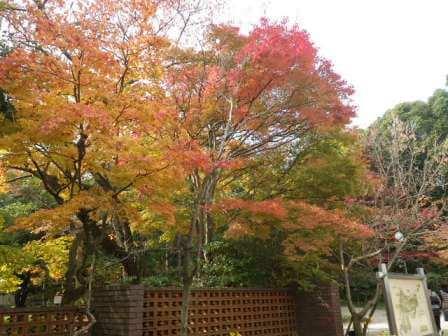 須磨離宮公園の写真3